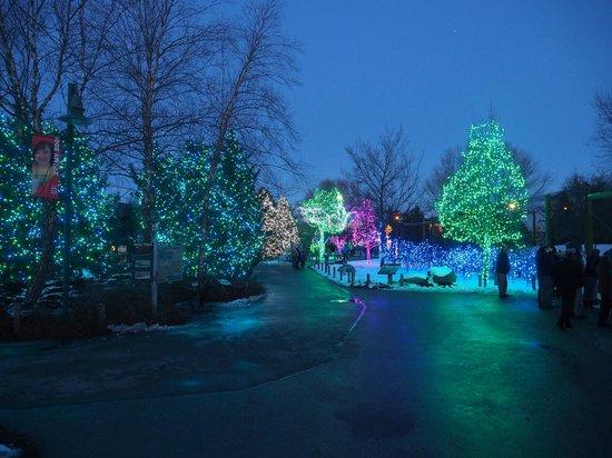 toledo zoo lights before christmas 1 - Toledo Zoo Lights Before Christmas
