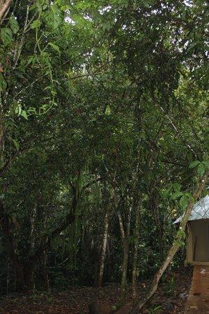 لا تييرا ديفينا: Jungle Immersion View