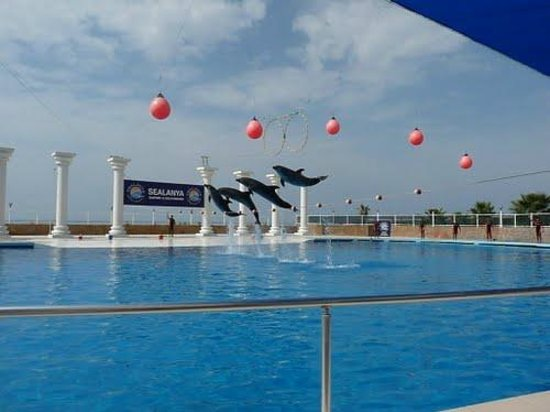Sealanya Dolphinpark - Antalya - Ce quil faut savoir ...