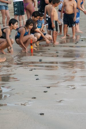 Sunscape Dorado Pacifico Ixtapa: Baby Turtle release at resort.
