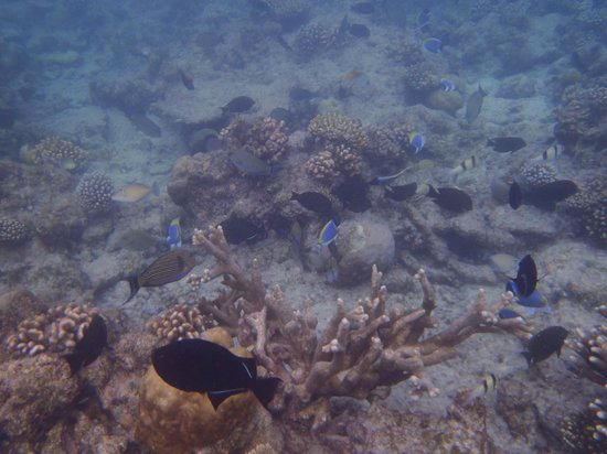 Kuramathi Island Resort: Fishes