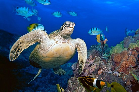 Patrick's Diving Adventures