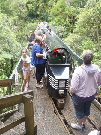 Rainforest Express: Stopped on the bridge to checkout the scenery