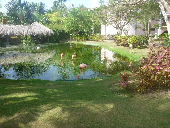 Natura Park Beach - EcoResort & Spa: just outside our room