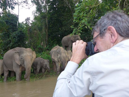 Osman's Homestay: Dad taking Photos of the Bornean elephants
