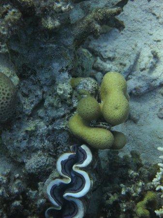 Ilios Dive Club: Klare Sicht unter Wasser