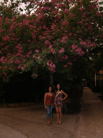 Sandos Caracol Eco Resort: Under a tree with wild flowers