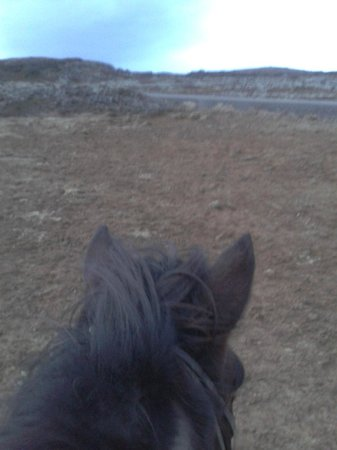 Ishestar Horse Riding Tours: Ritt durch die Lavafelder