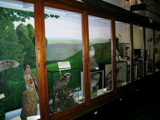 Whitby Museum: display of birds from district