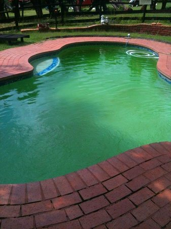 Kwa Manzi Guest Farm: Pool