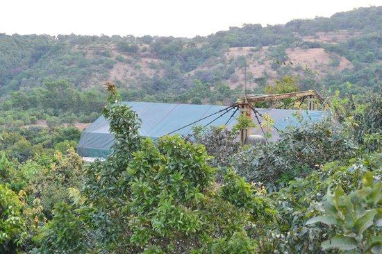 ذا ماتشان: The canopy Machan perched in the midst of the forest 