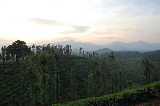 Annapara Home Stay: View over the estate