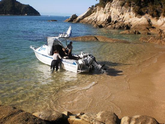 Abel Tasman Dive
