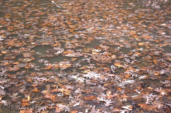 Matthiessen State Park : Leaves  frozen in ice