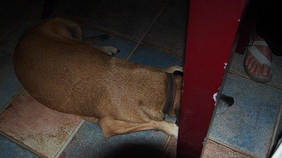 Kawann Beach Hotel: nos amis les petits chiens
