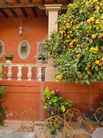 Hotel Sautto : Oranges for the picking