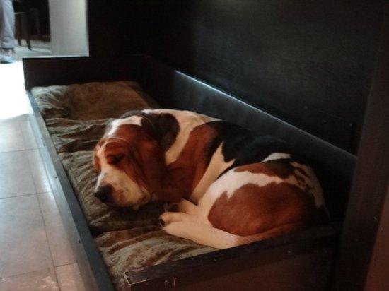 Hotel Montmorency: um dos cães