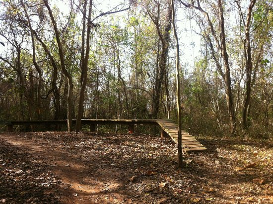 Justin P. Brindley Trail: Inside the trail and challenge course