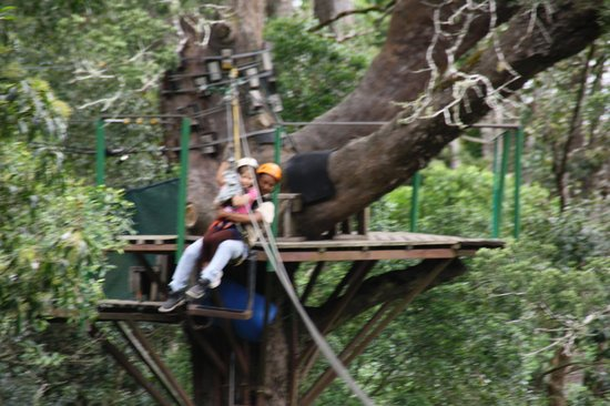 Tsitsikamma Canopy Tours: flying thru the trees!