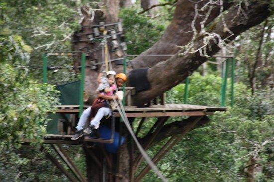 Tsitsikamma Canopy Tours: flying thru the trees! 