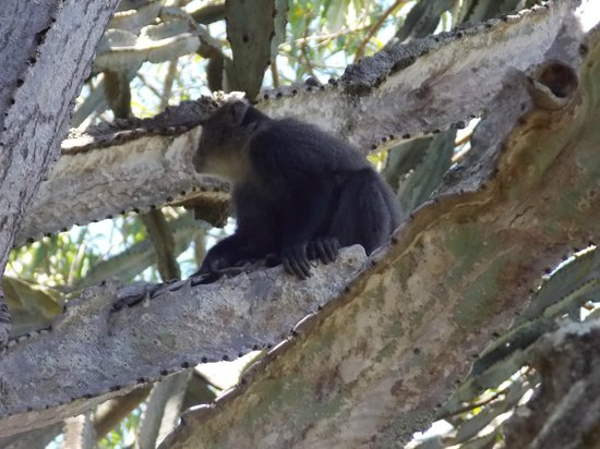 Mount Meru Game Lodge & Sanctuary: resident alarm clock