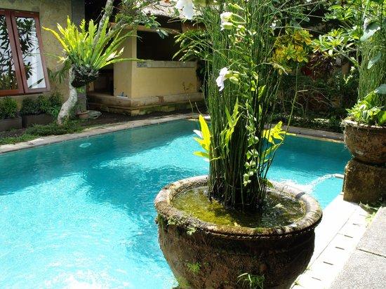 Barong Resort and Spa: Pool