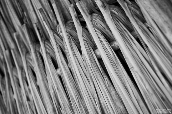 Belizean Dreams: Thatch shade on the beach