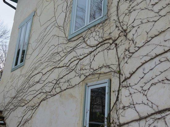 Tamaracks Country Villa : Vines