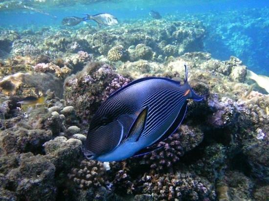 Jaz Lamaya Resort: beautiful snorkelling