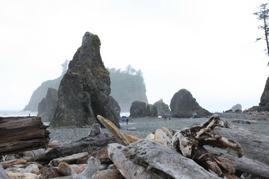 Ruby Beach in the mist