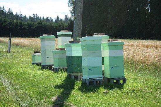 Graysmarsh Berry Farm honeybees