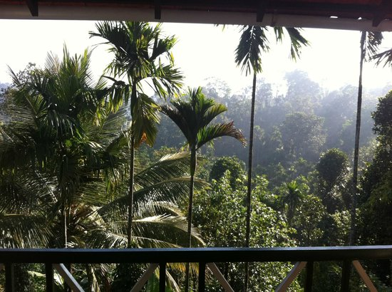 Glenora Homestay: View from our cottage