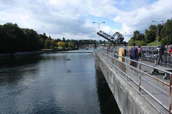 View of the locks picture of hiram m chittenden locks for Ballard locks fish ladder