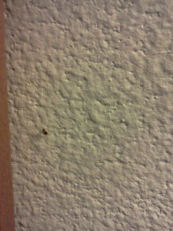 Super Lodge Inn & Suites Greenville : proof bed bugs