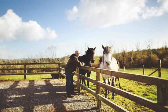 Clondanagh Cottage: Spending time with these horses is therapy in itself!