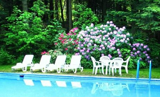 Berkshire Hills Country Inn: Reflections of  Rhododendrons by the pool