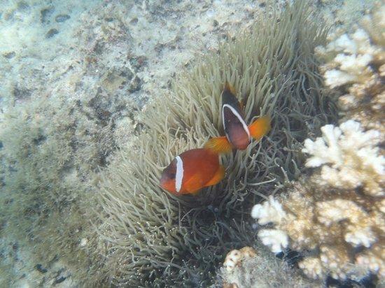 Reef House : snorkelling