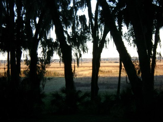 Paynes Prairie Preserve State Park: Paynes Prairie just before sunset from the visitor center