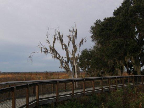 Paynes Prairie Preserve State Park: La chua trail