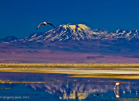 Awasi Atacama - Relais & Chateaux: Flamingos' rare pose on an Awasi Hotel excursion.