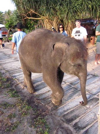 JW Marriott Phuket Resort & Spa: Ya Ya the baby elephant