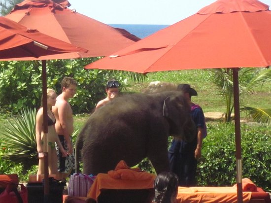 JW Marriott Phuket Resort & Spa : Baby Elephants greeting holiday makers