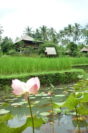 Bali Eco Stay Bungalows: Looking from the stream