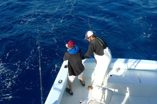 Scooping up ballyhoo for bait - Picture of Gotcha Sport
