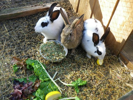Horse-Haven Farmstay : rabbits