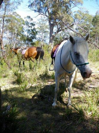Horse-Haven Farmstay : picnic spot