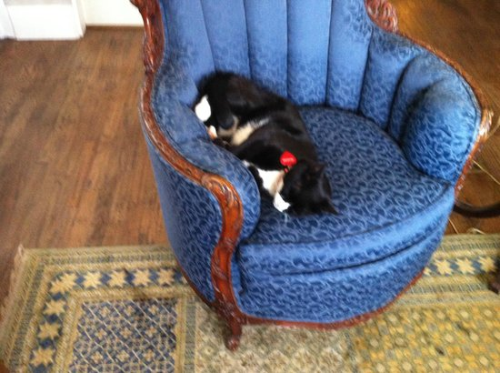 The Hotel Limpia: Tuxedo, the Resident Cat