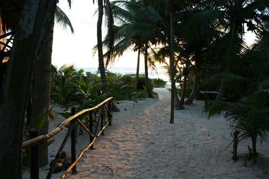Nueva Vida de Ramiro: Sunrise on the path to the beach from Pajaro Azul