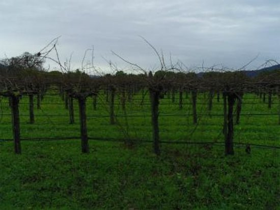 Peju Province Winery: ぶどう畑