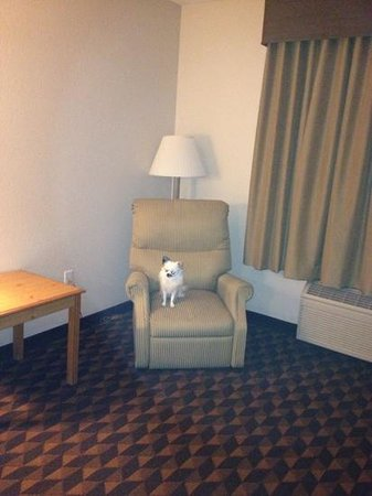 BEST WESTERN PLUS Gateway Inn & Suites: room and my dog